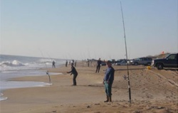 Cape hatteras striped bass fishing for Cape hatteras fishing report