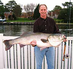 51 pound striper caught on a fly rod