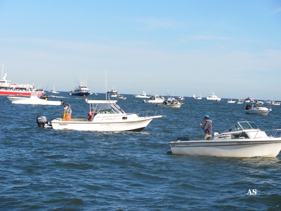 Surf Fishing for   striped Bass with Boats