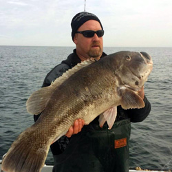 Pending World Record Tautog